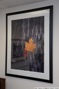 "[""A photo of leaves hangs on a wall in Senator John D. (Jay) Rockefeller's office.""]%"